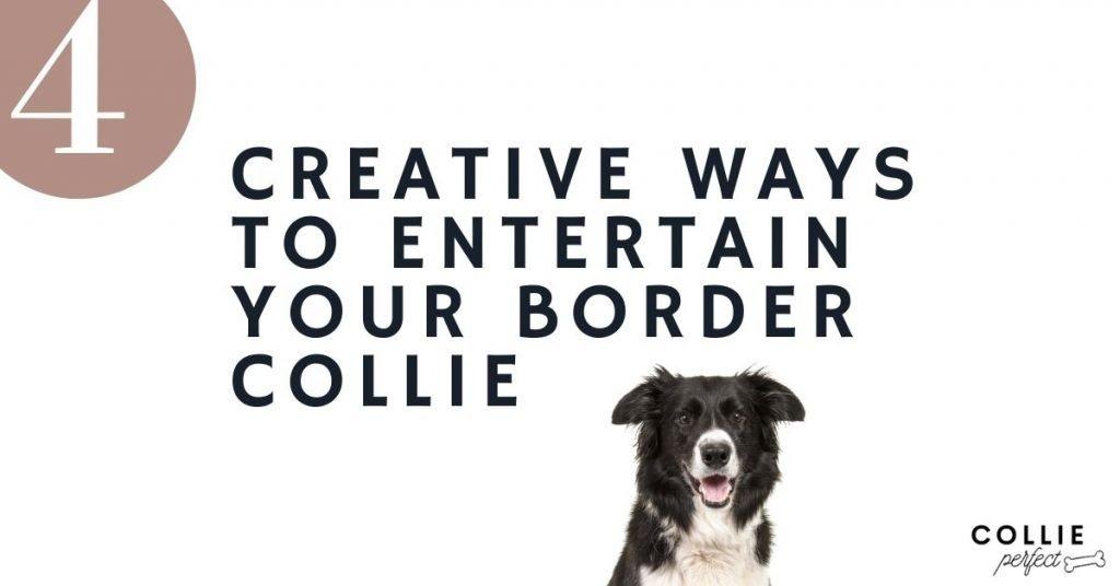 Creative ways to entertain your border collie