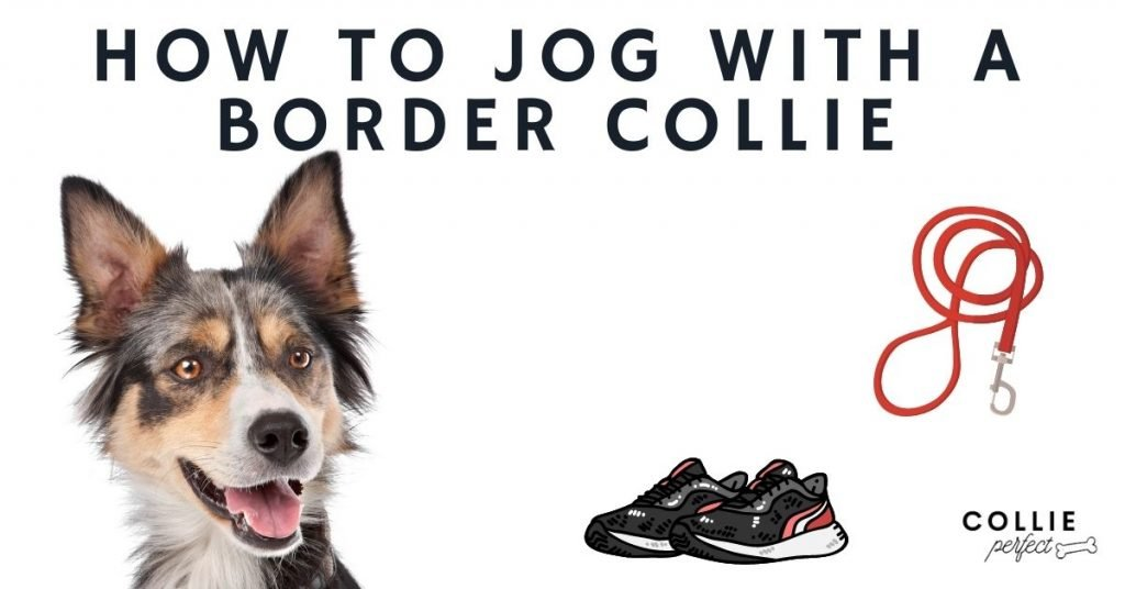 How to jog with a border collie