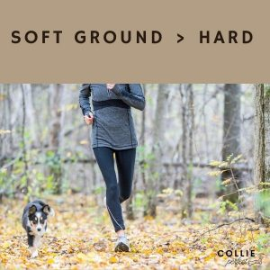 How to jog with a border collie in woodland