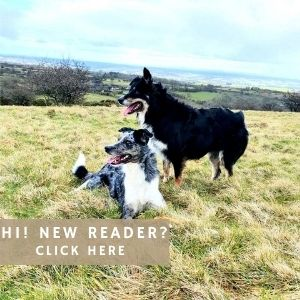 New Reader About Us Collie Pride Link