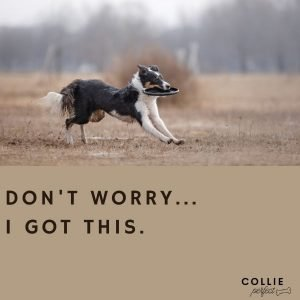 Entertaining a border collie and fighting boredom using flying disks
