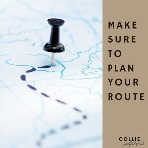 How to run with a Border Collie and plan a safe route
