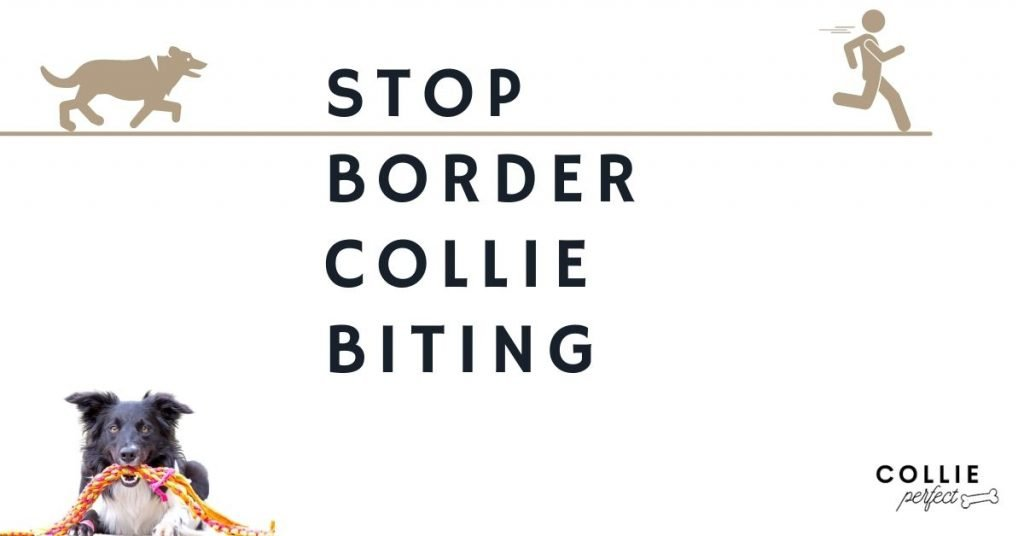 how to stop border collie puppy biting