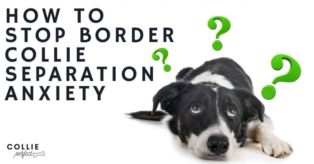 how to stop border collie separation anxiety
