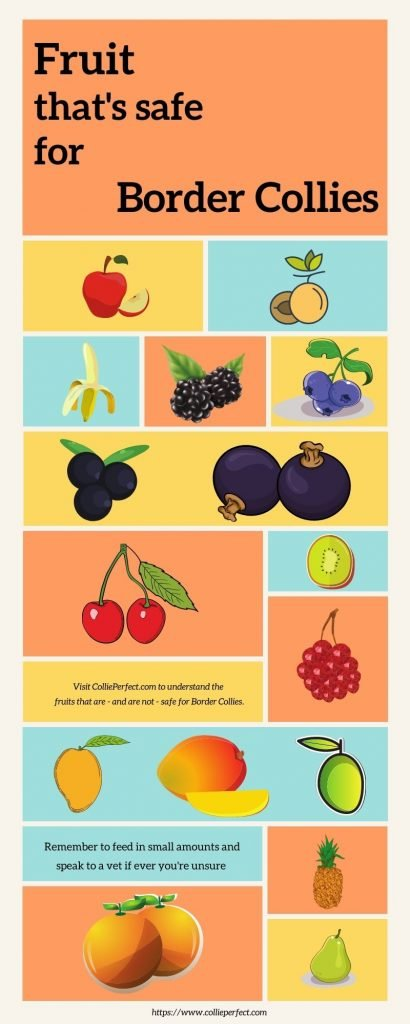 Inforgraphic showing fruits that are safe and Border Collies can eat