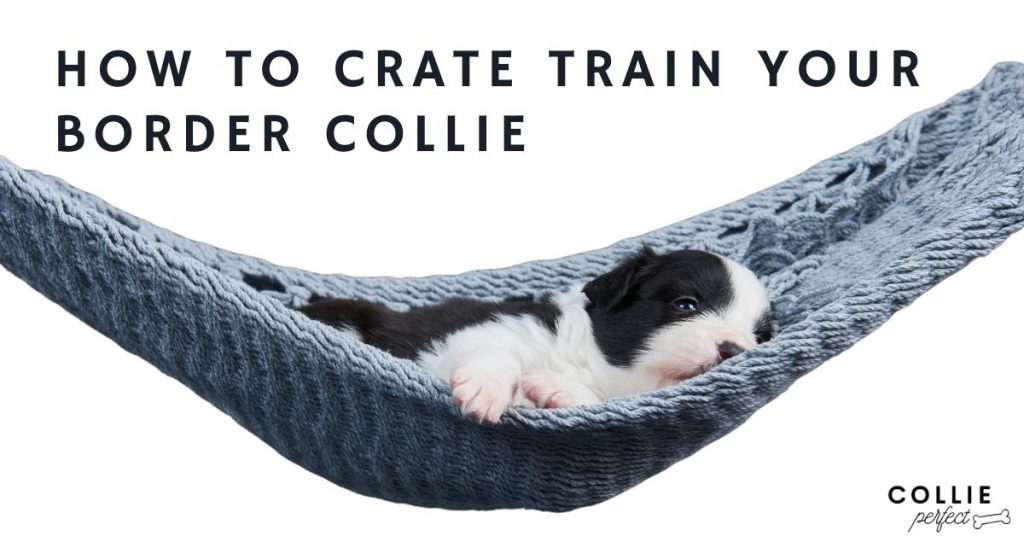 How to crate train your border collie puppy