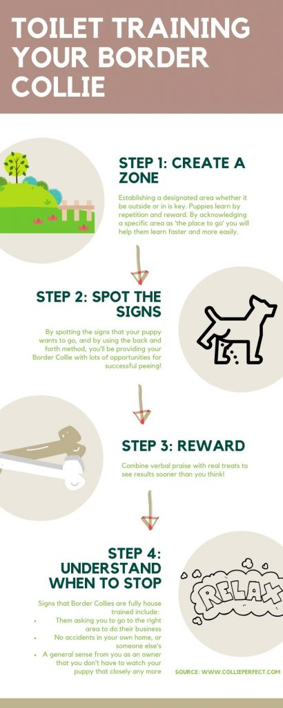 Toilet Training your border collie infographic