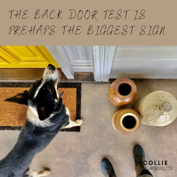 how to toilet train a border collie back door