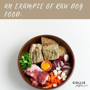 Example of raw dog food for border collies
