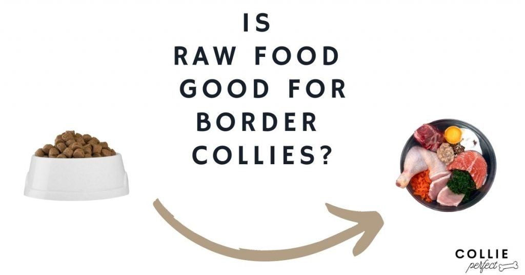 is raw food good for border collies, pros and cons