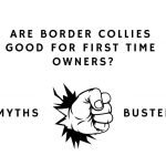 Are border collies good for first time owners