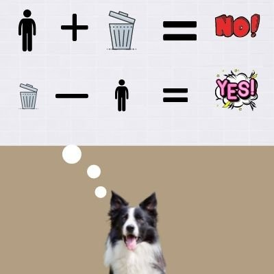 Are border collies too clever for first time dog owners?